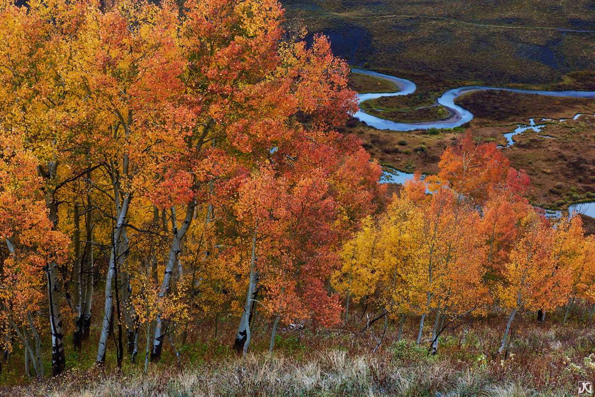 The East River snakes its way through the valley below a stand of autumn aspen trees.