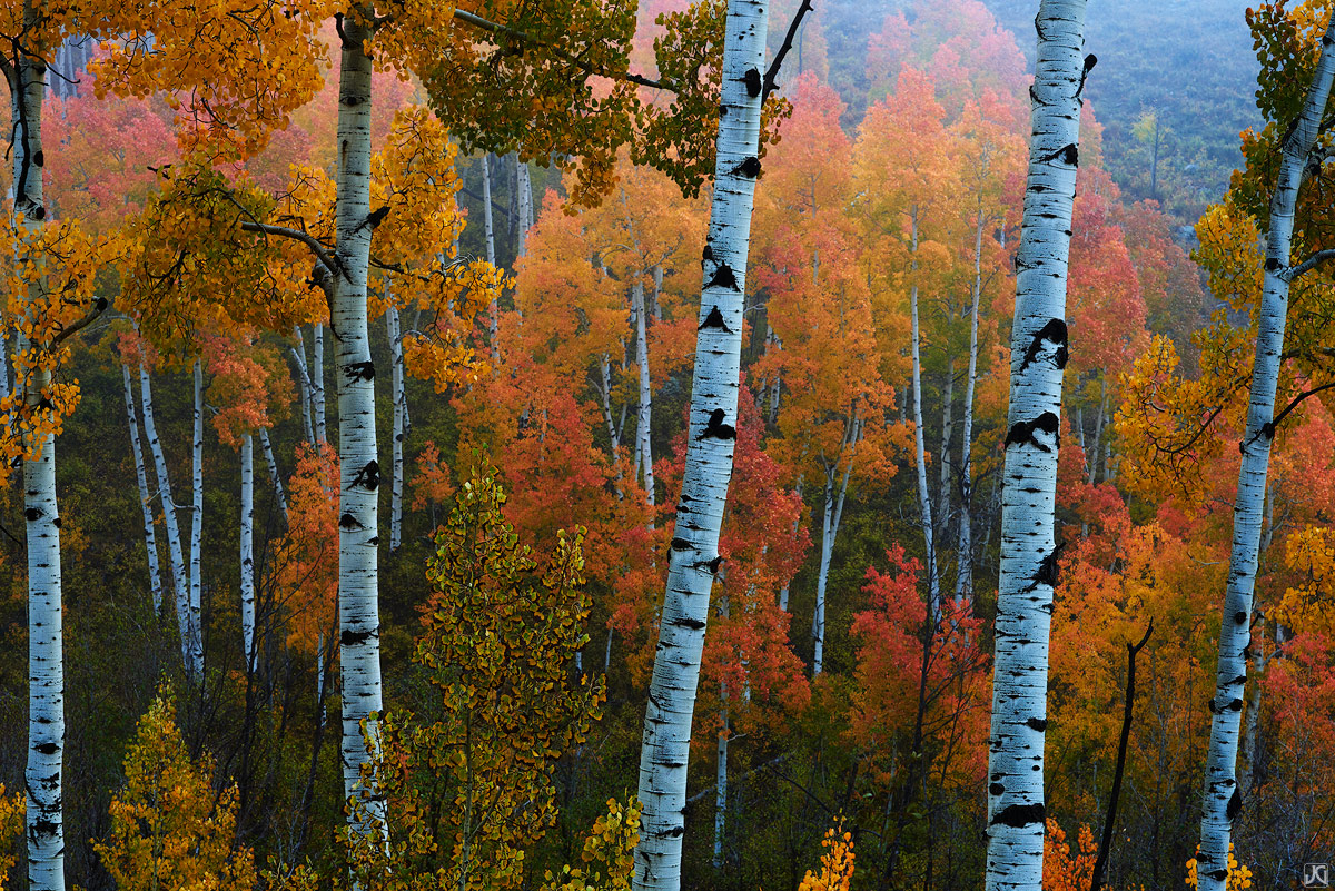 colorado, autumn, aspen, trees, misty, san juan mountains, photo