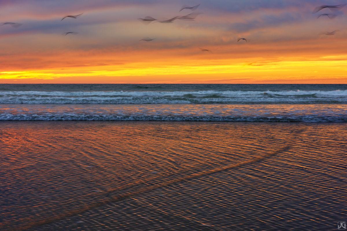 California, Solana Beach, sunset, San Diego, coast, birds, photo