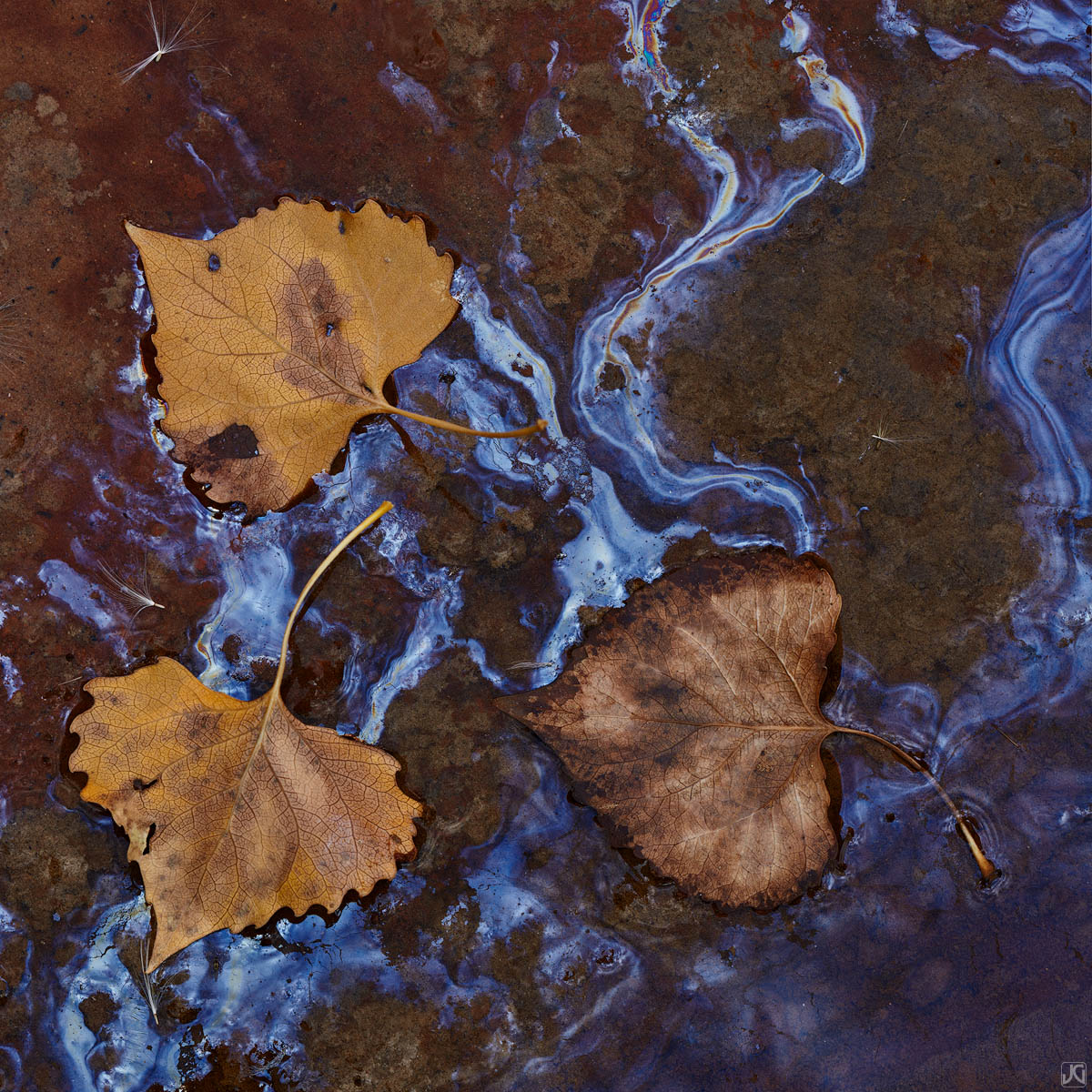 Utah, Zion, autumn, leaves, mud, photo