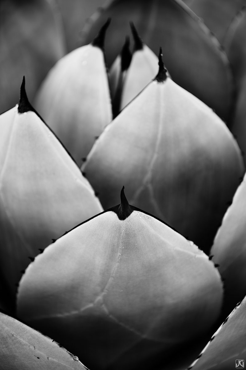 California, agave, botanical, garden, photo