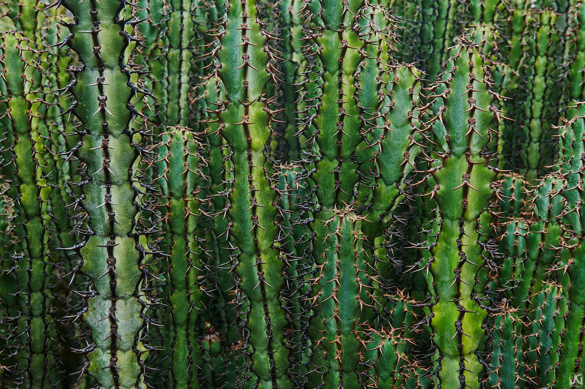 California, cactus, botanical, garden, photo
