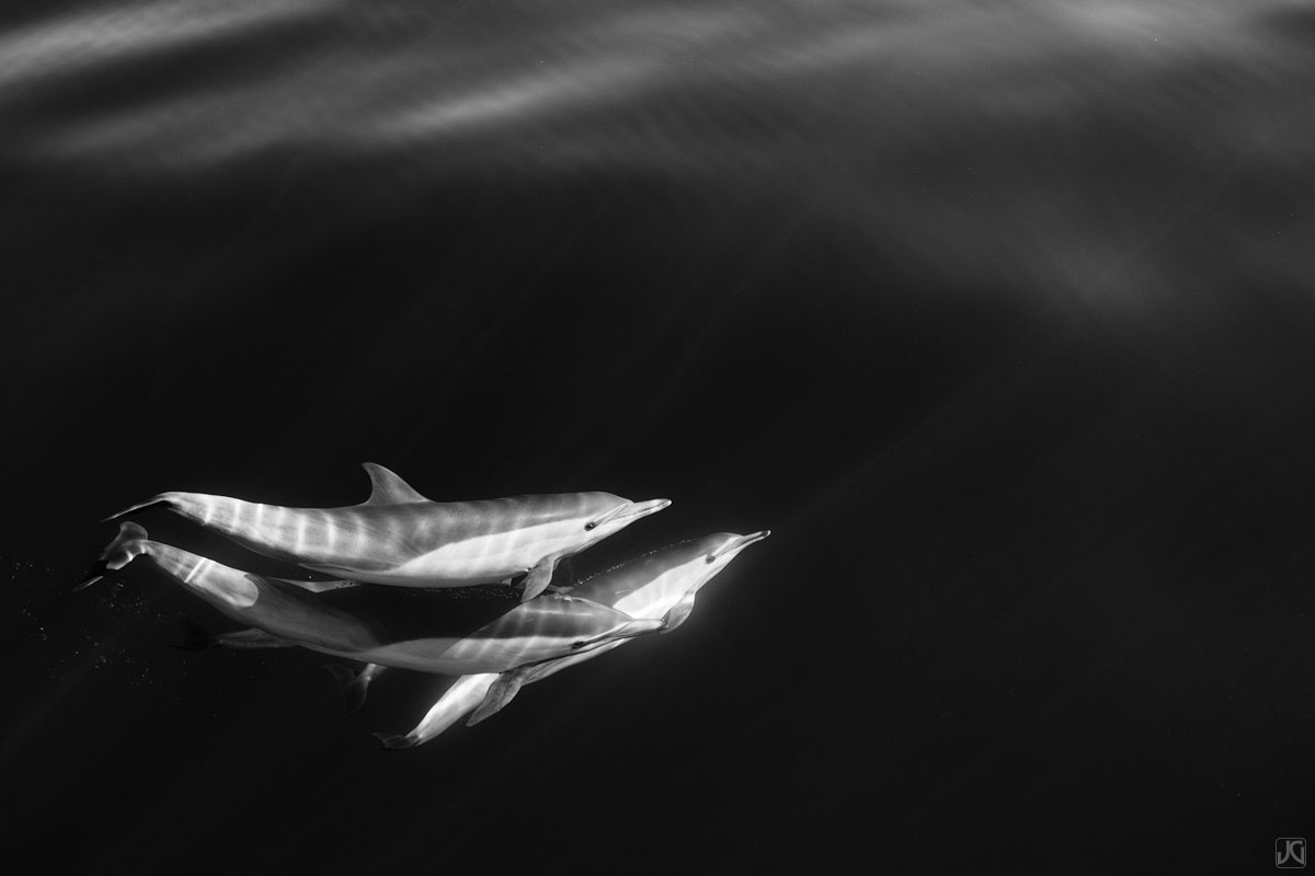 dolphins, California, Coast, pods, photo
