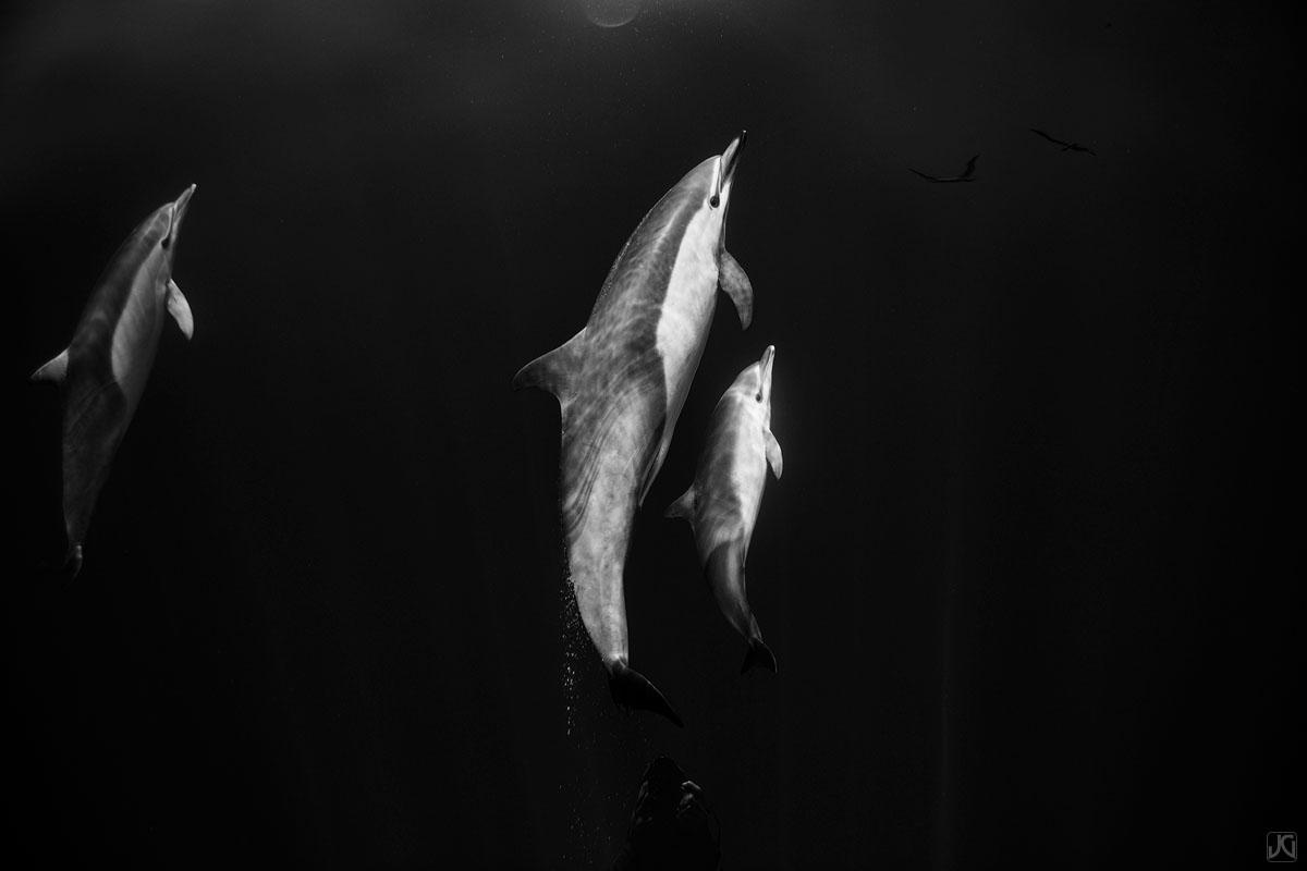 California, coast, dolphin, pod, photo