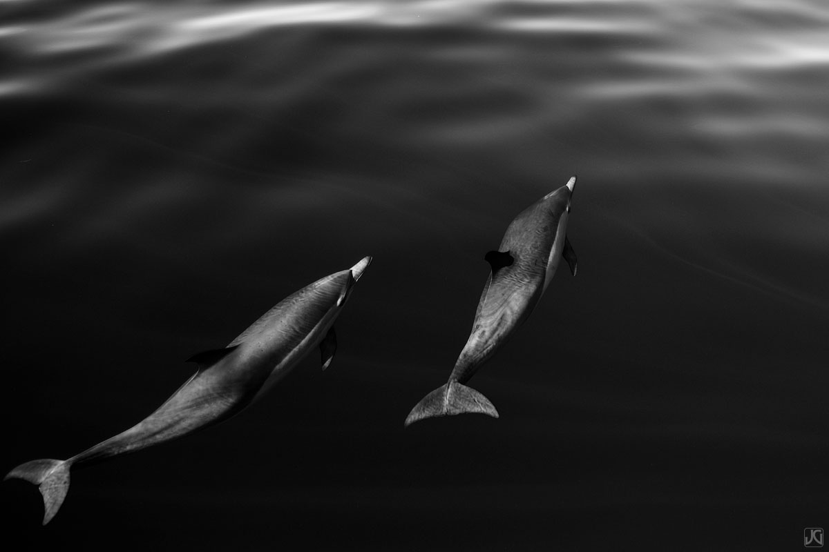 California, coast, dolphins, ocean, photo