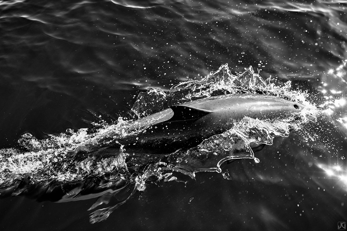 As a dolphin surfaces for air, water is pushed aside and the blowhole is free to inhale clean air.