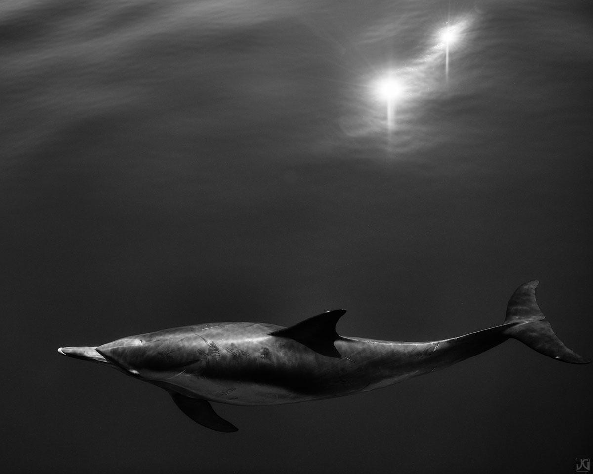 California, coast, dolphin, photo