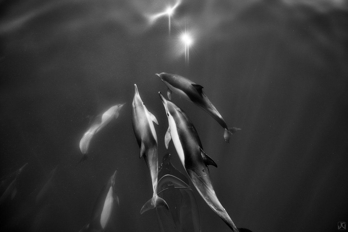 California, coast, dolphins, ocean, photo