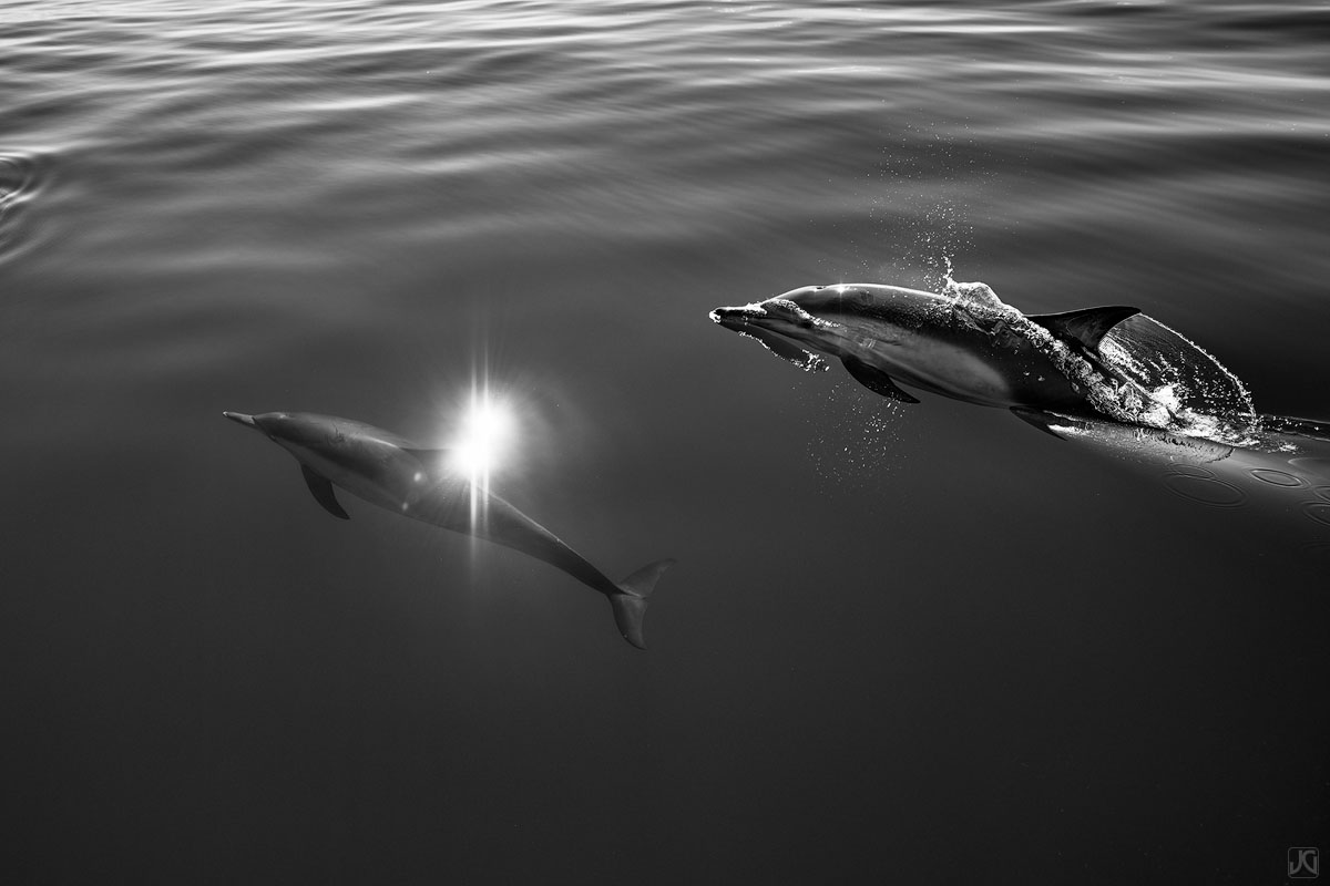 A pair of dolphins swim through the glassy ocean on a clear day.