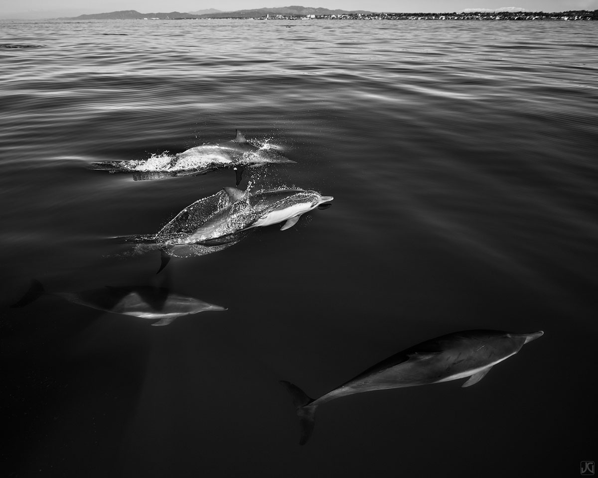 With the coastline of Oceanside in sight, these dolphins are in search of their next meal. We watched hundreds, if not thousands...