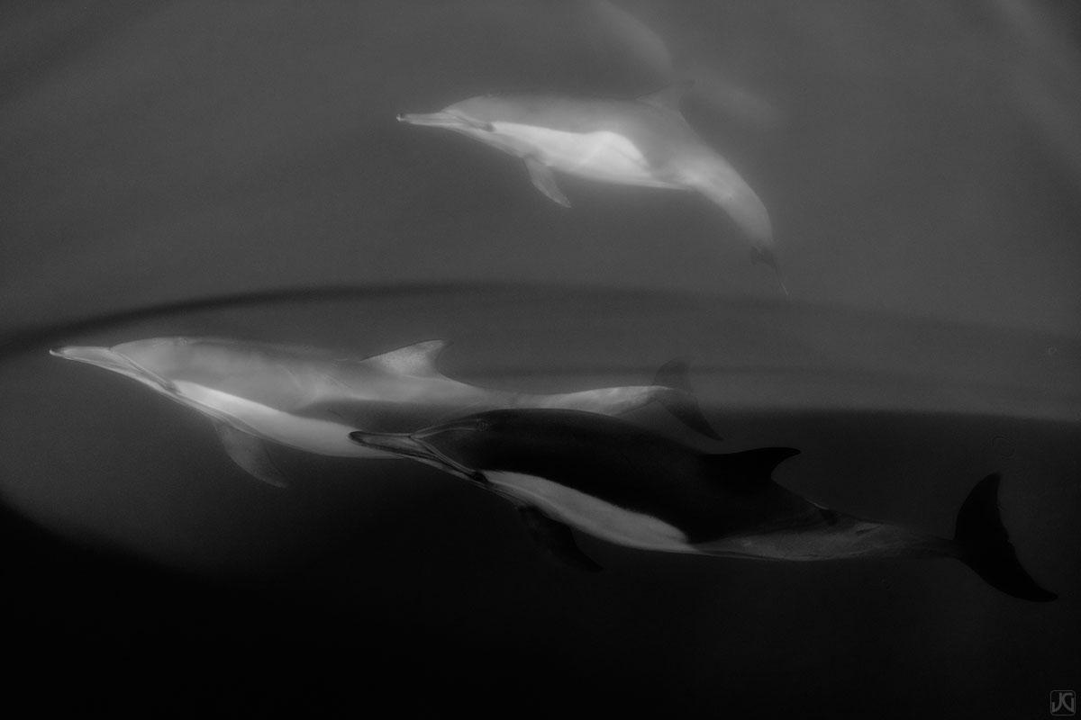 California, coast, dolphins, pod, photo