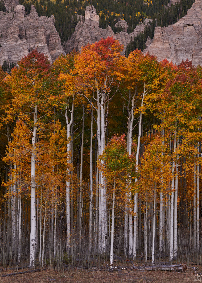 Colorado, aspen, forest, autumn, photo