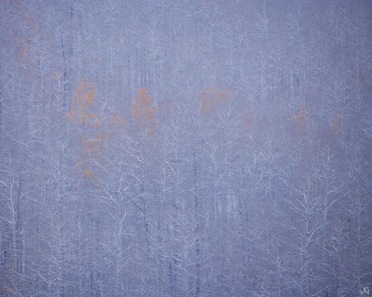 Colorado, aspen, forest, autumn, snow, photo