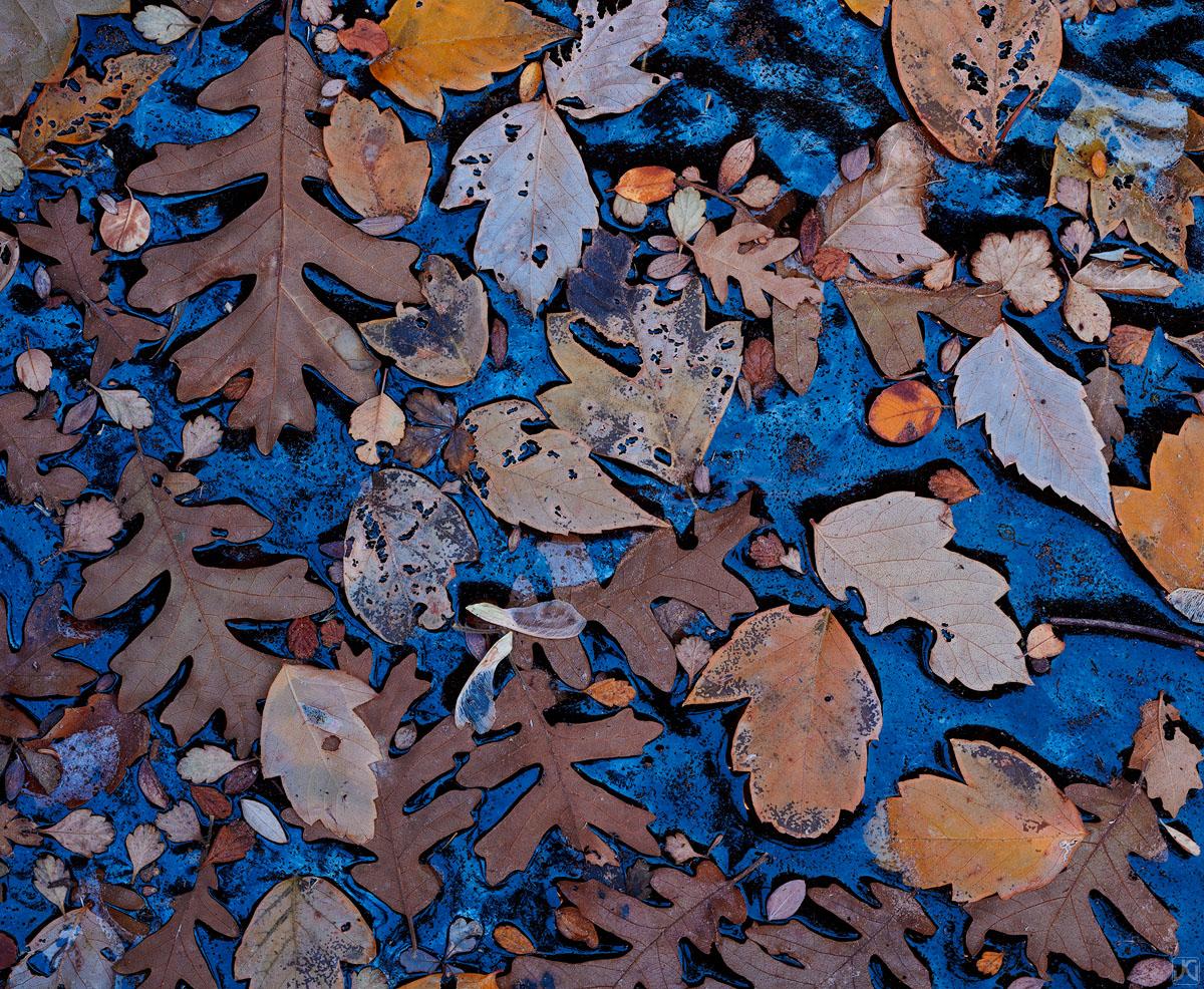 Zion, Utah, autumn, leaves, fall, Virgin River, narrows, photo