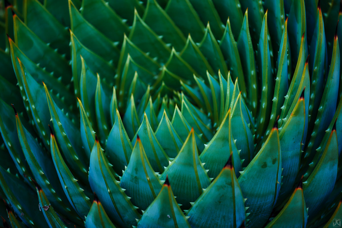 California, Berkeley, aloe, spiral, pattern, shapes, botanical, garden, photo
