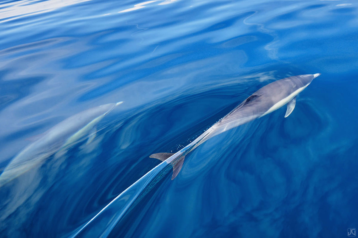 As dolphins swim by, they slice through the top layer of the ocean when they surface for air.