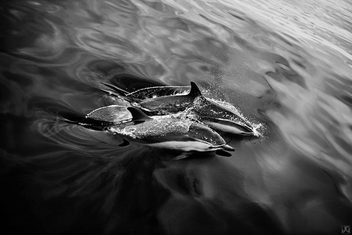 California, dolphins, coast, photo