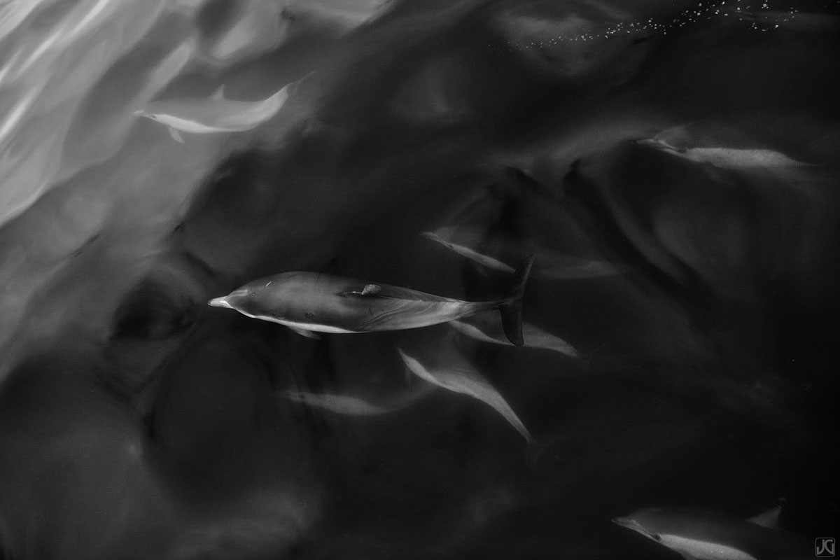 California, coast, dolphins, photo
