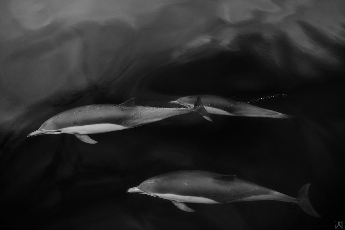 Three dolphins glide along underneath the soft reflections from clouds above.